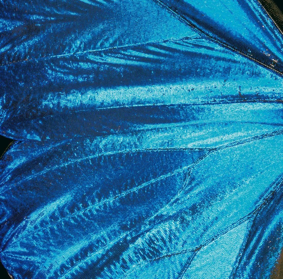 Die Flügelfarbe des blauen Himmelsfalters entsteht durch Nanostrukturen.